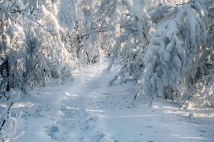 The Siberian winter. by box426