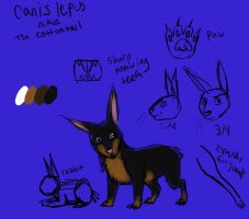 Crappy new cottontail info ref by DarkChocaholic