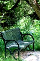 Bench in the Woods by greenwalled1