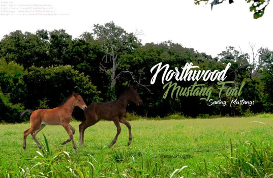 Basic Foal Photo by NorthwoodMustang