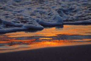 Golden beach by Daisydog8