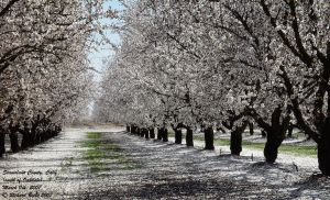 Orchard 4 by rbeebephoto