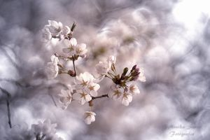 Little spring white flowers by laluna19