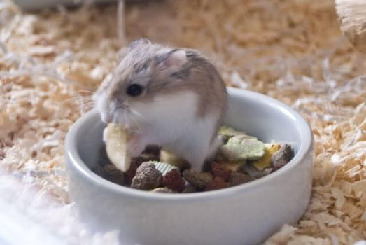 Yugi my hamster by LadyWined