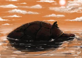 Turtle style by RogierB
