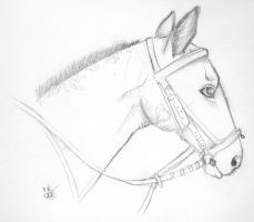 Milly- Pencil Sketch by CopperFishy
