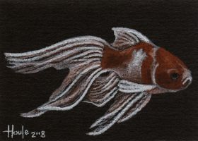 Fancy Gold  Fantailed Goldfish by HOULY1970