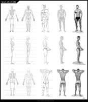 Man Anatomy by Azot2016