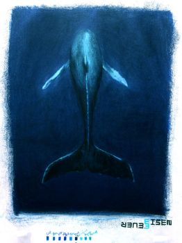 Whale by EisenFeuer