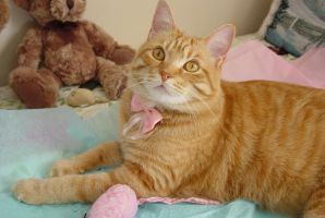 Ginger girl by lucytherescuedcat