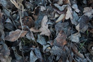 Frosted Leafs Texture Stock by wuestenbrand