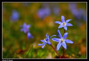 Patch of wild flowers by CecilyAndreuArtwork