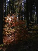 Autumn Light V by Synaptica