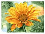 Yellow flower by Docali