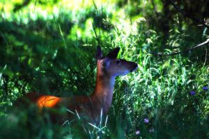 Whitetail Doe 1 by S-H-Photography