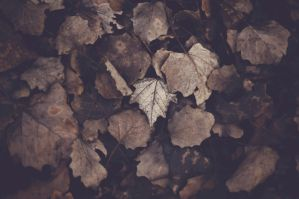 leaf by vajkarious