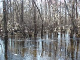 Swamp 5 by abuseofstock