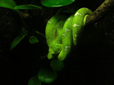 Green Serpent by Falco101