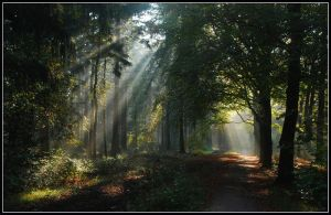 Remembering autumnal sunbeams by jchanders