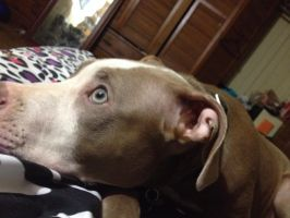 Dreaming of a place where they don't judge us pits by RockerKittyPhotos