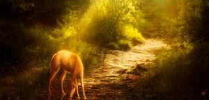 Path of Gold-Comm. by xDjurax