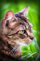 Profiling the cat by IndigoRavenImagery