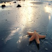 starfish 4 by foureyestock