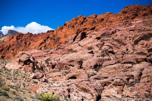 Red Rock Canyon, NV by joelmello