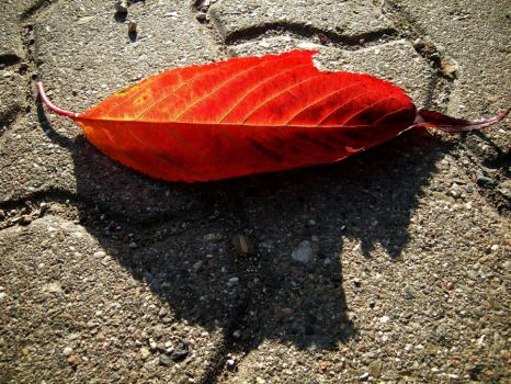 lonely leaf in the sun by feldrand