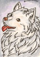 American Eskimo Dog ACEO by WildGriffin