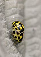 Ladybird Love by SianMurrell