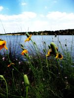 Lake and flowers by Darkerhaze