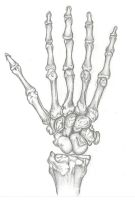 Study of Skeleton Hand by SkeletonOfARose