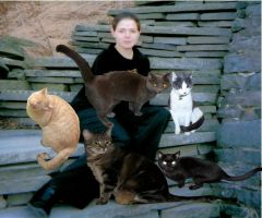 Crazy Cat Lady ID by EclipticSnowLeopard
