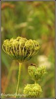 Bee on a Flower by EuphoricPhotographs