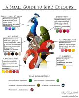 A Small Guide to Bird Colours by Eurwentala