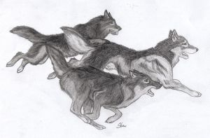 my little wolves pack by silent-howl