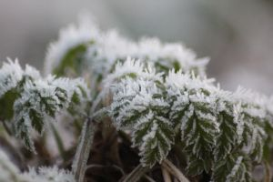 frost closeup by harlia