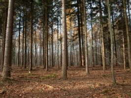 STOCK Woods-06 by Inilein