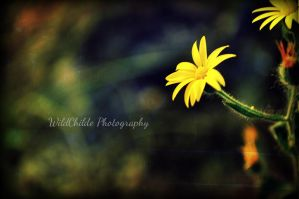 Springs Foot Step by Wildchild9