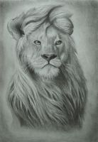 Lion by DarkSpawn81
