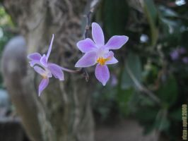 first orchid by rei-kawaii