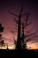 Lonely tree by thegoggel