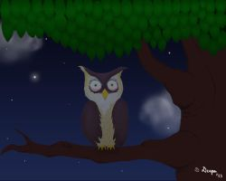 Owl in the Night by 4everanimaniac