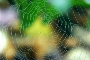 Spring Spider Web by RobertaScalvini