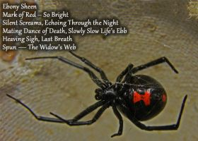 The Widow's Web by PopeyeTheoB