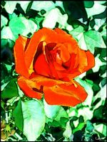 Let's paint Roses 2 by Layit