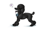 Standard Poodle Puppy by Perocore