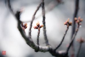 First sign of Spring 2 by vnt87