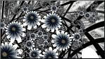 Black and White Flower Garden by Ksm17